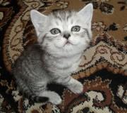 срочно продаю котят!