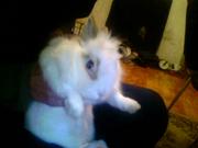 Декоративный кролик с клеткой и всем необходимым.