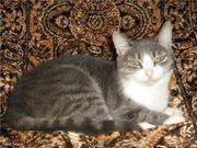 Кошка Кристина ищет дом