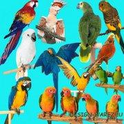 Купим оптом декоративных птиц разных пород